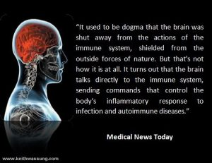 brain-immune-system-communication